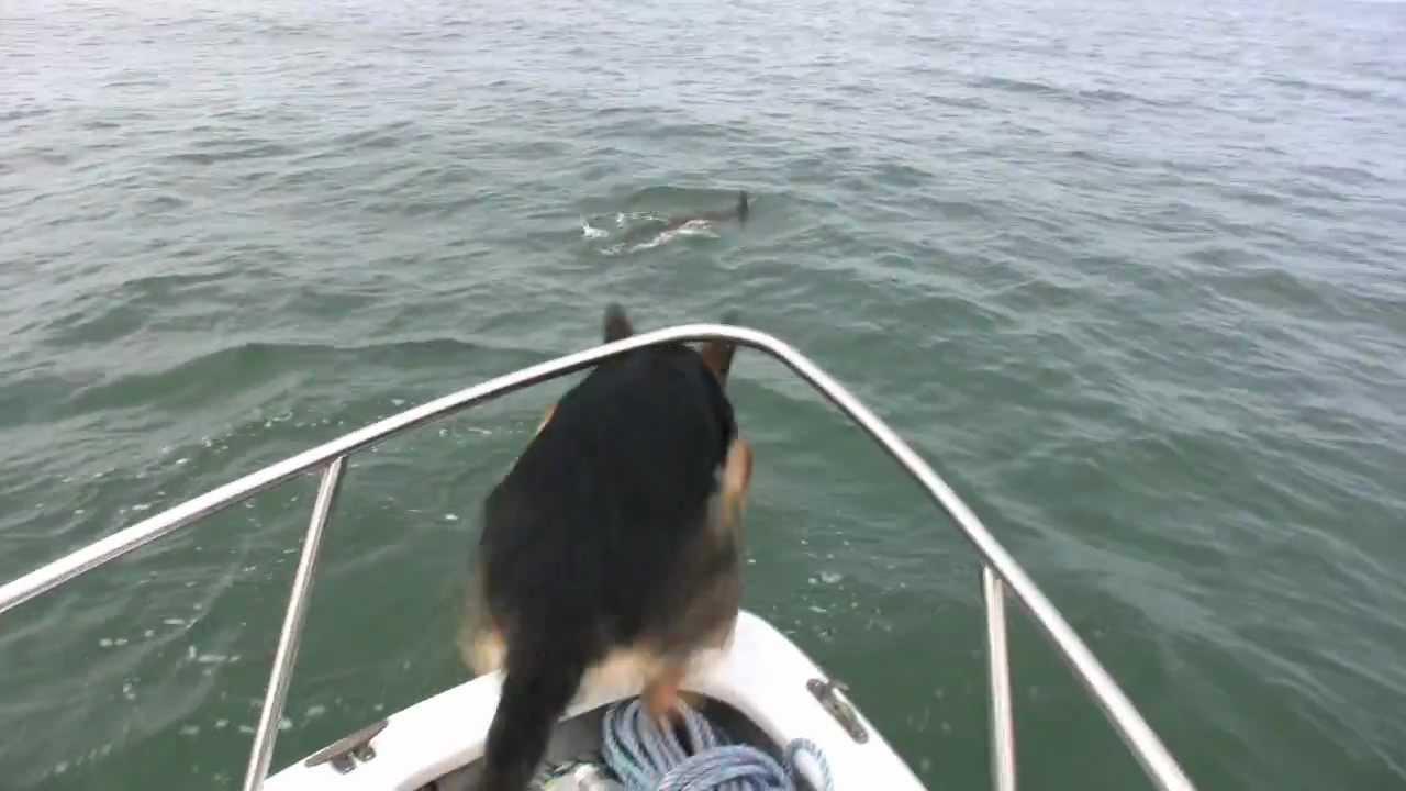 生まれて初めてイルカを見た犬がとったオドロキの行動とは・・・