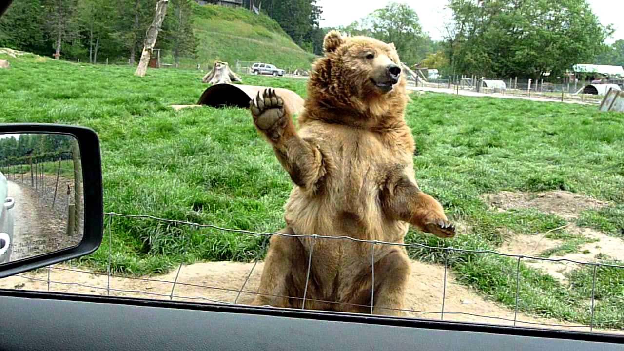 とても芸達者なクマに会えるオリンピックゲームファーム