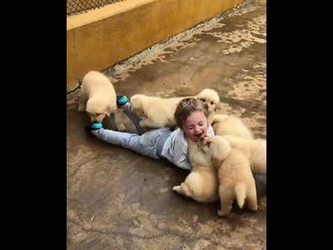 子犬に懐かれて大変な状況の子供