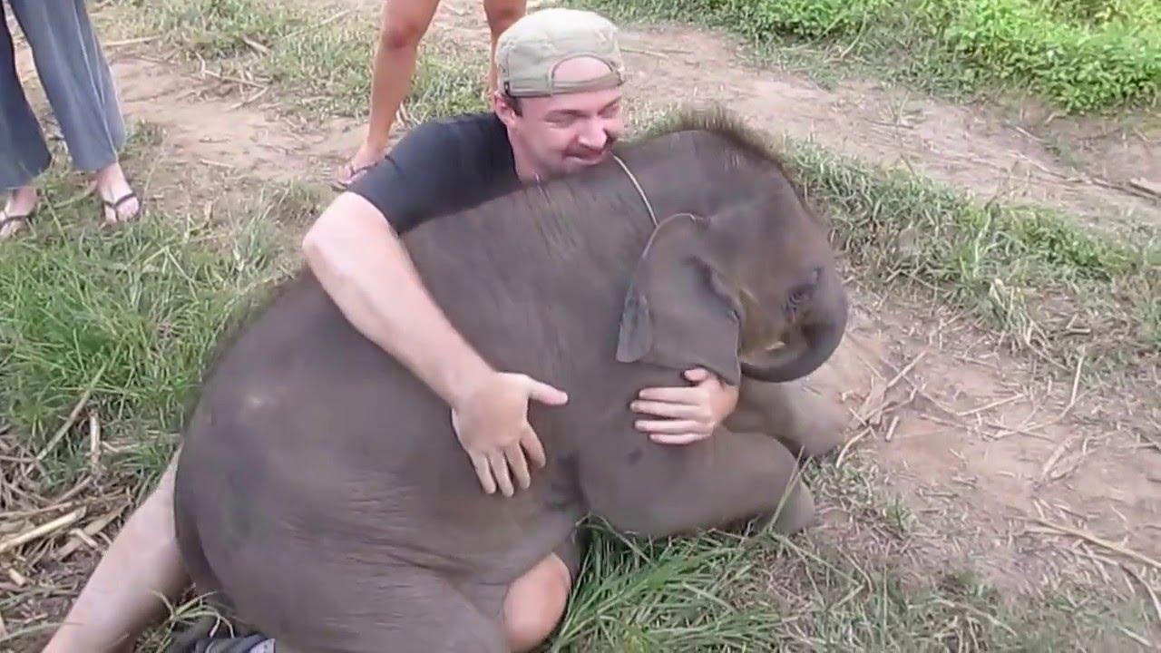 赤ちゃん象に愛されてしまった旅行者