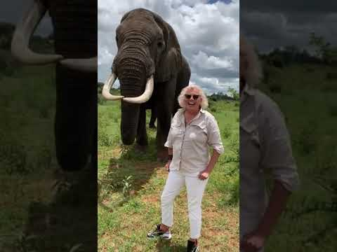 象がおばあちゃんにイタズラしちゃう