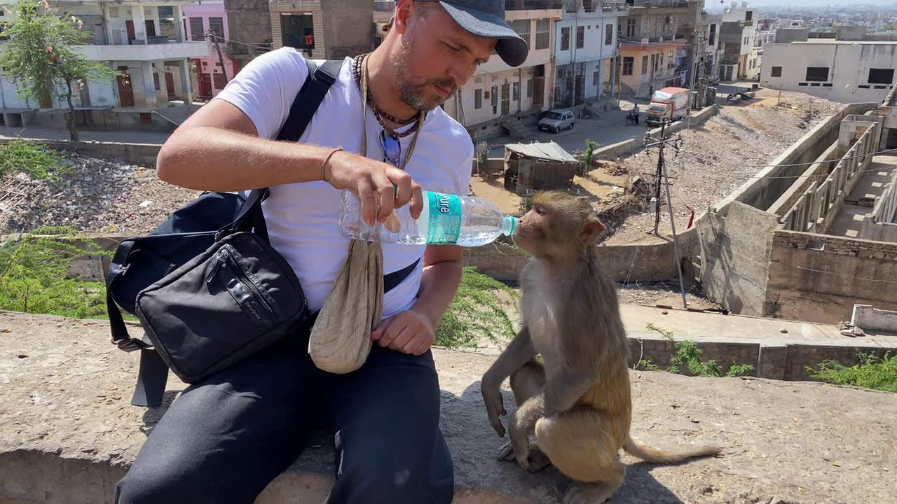 お水を行儀よく飲むお猿さん