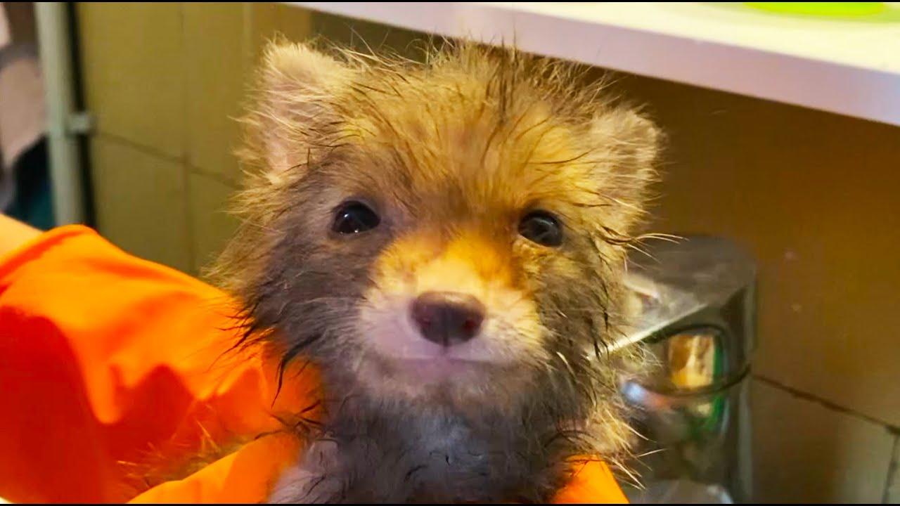かわいい狐が大人に成長するまでの様子に感動