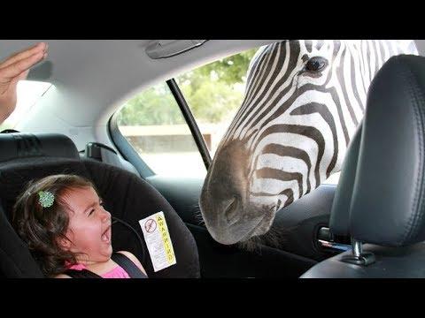 動物園で見るのは動物たちだけじゃない! 子供にも大注目!!