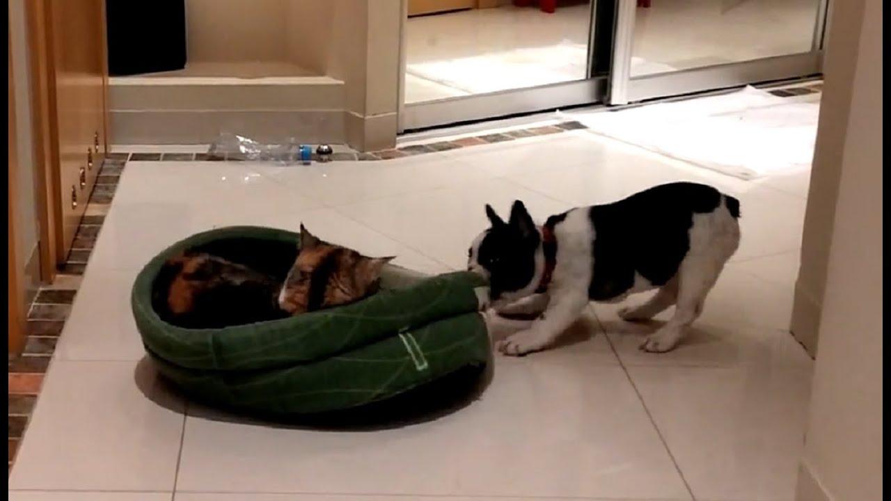 これは僕のベッドだよ!あっちへ行って!
