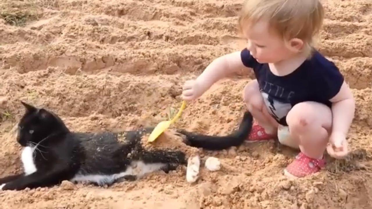 猫とお子さんのライバル同士対決!癒されるバトル!