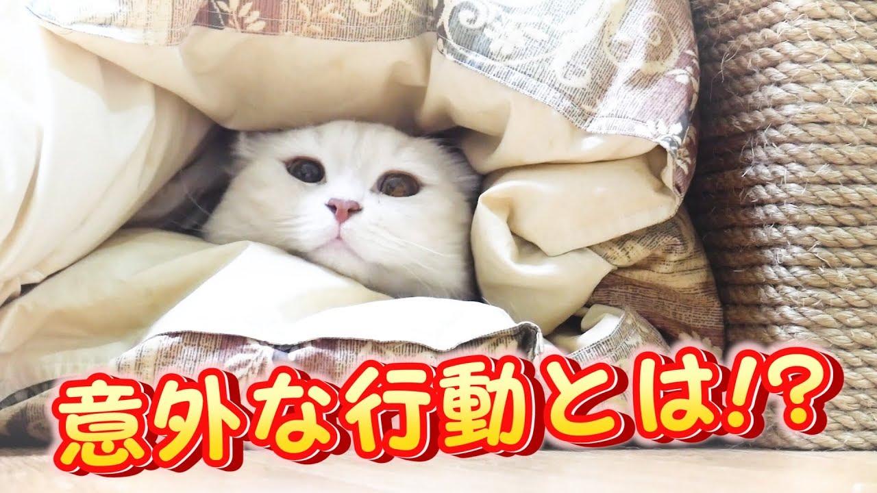 同居猫に遊んでほしくて「かくれんぼ」を始めた猫