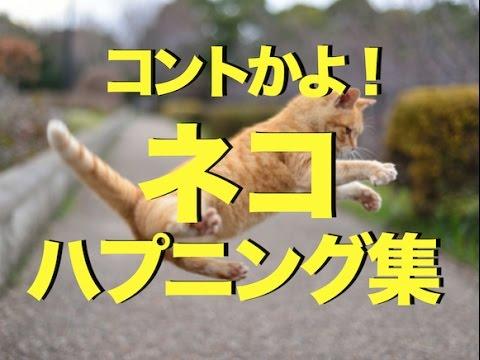 猫ハプニングコント最高!