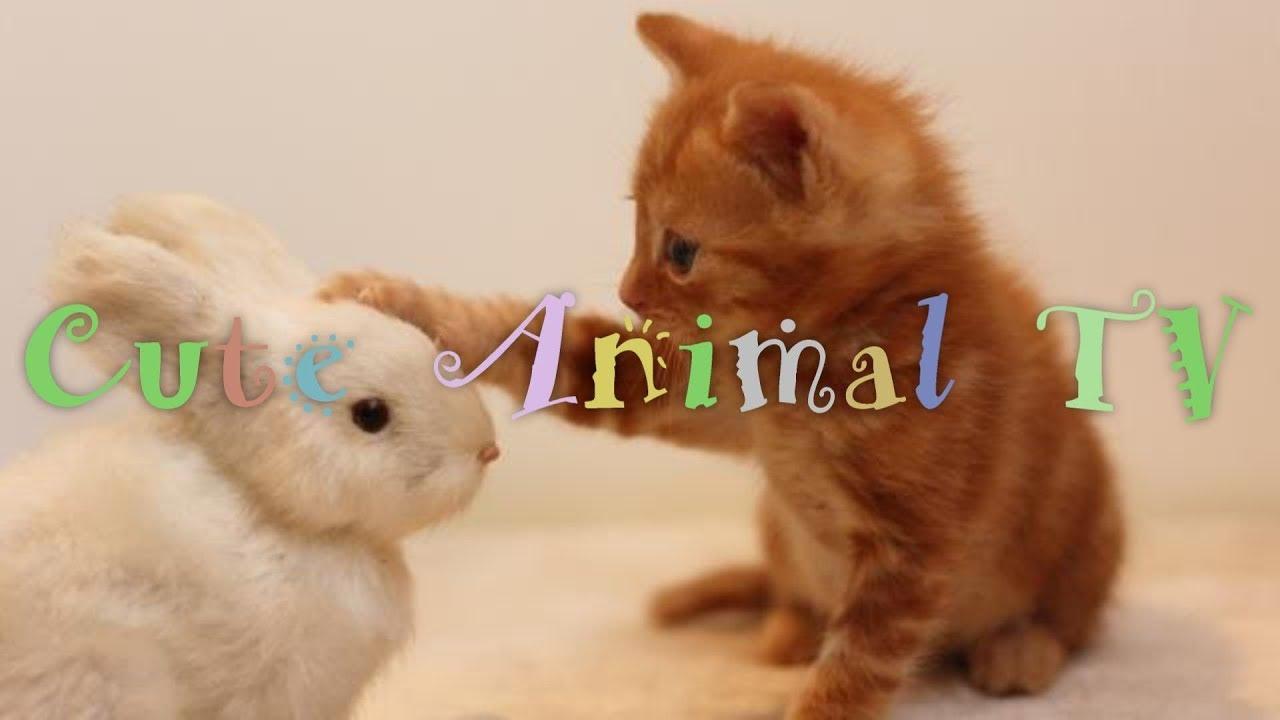 動物の赤ちゃんに癒やされる