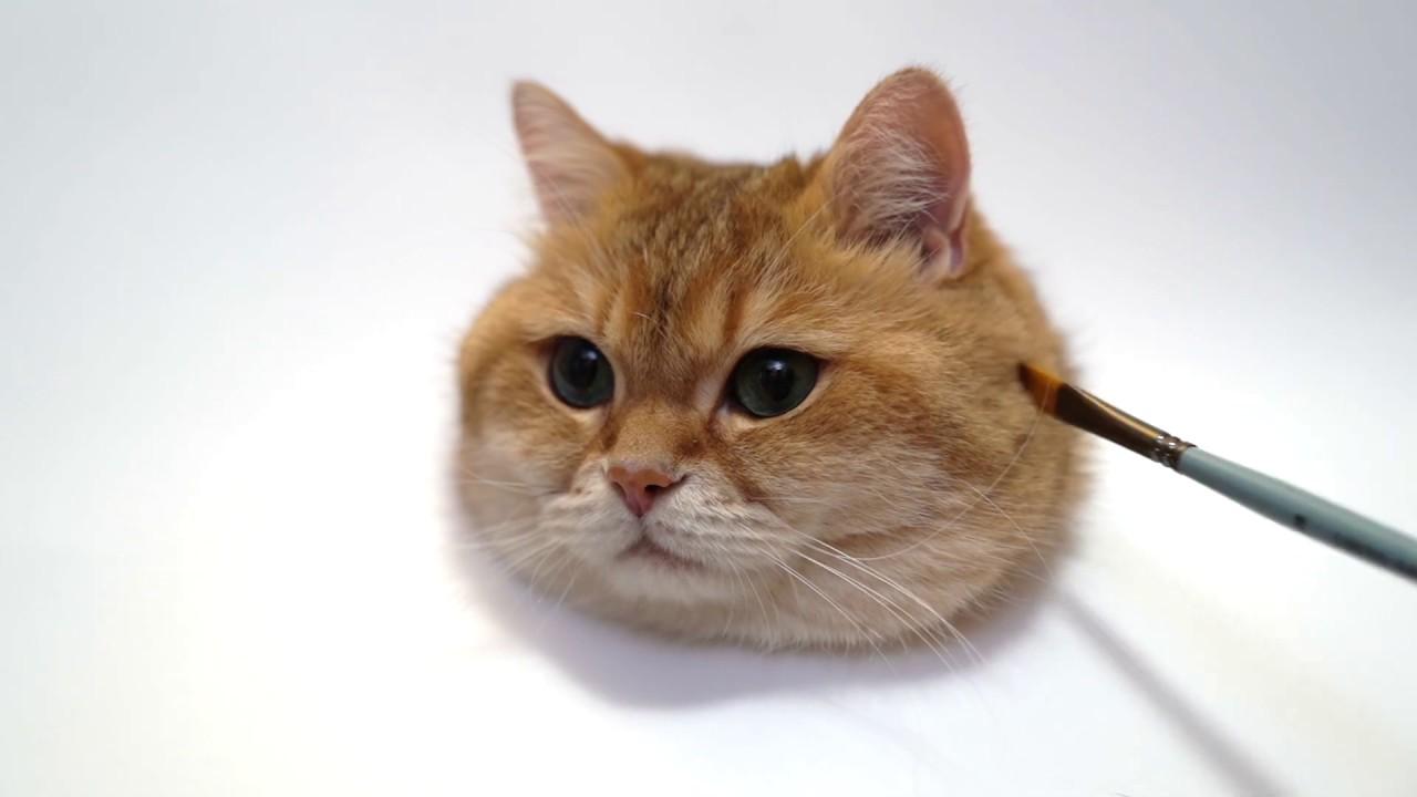 絵?本物?かわいい猫