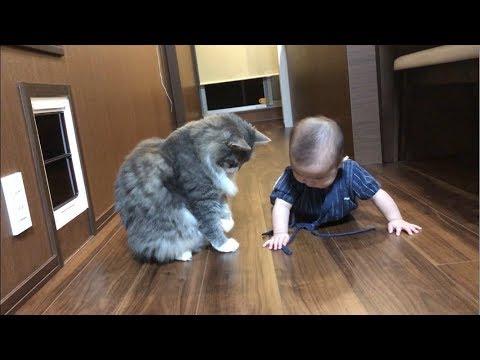 赤ちゃんを優しく見守るの猫が母親みたいで癒される