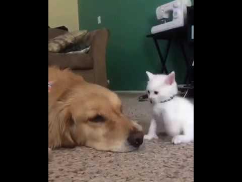 子猫にヤンチャされても見守る犬に癒される