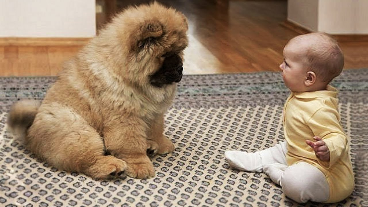可愛い犬!可愛い猫ちゃん達大集合の動画特集!