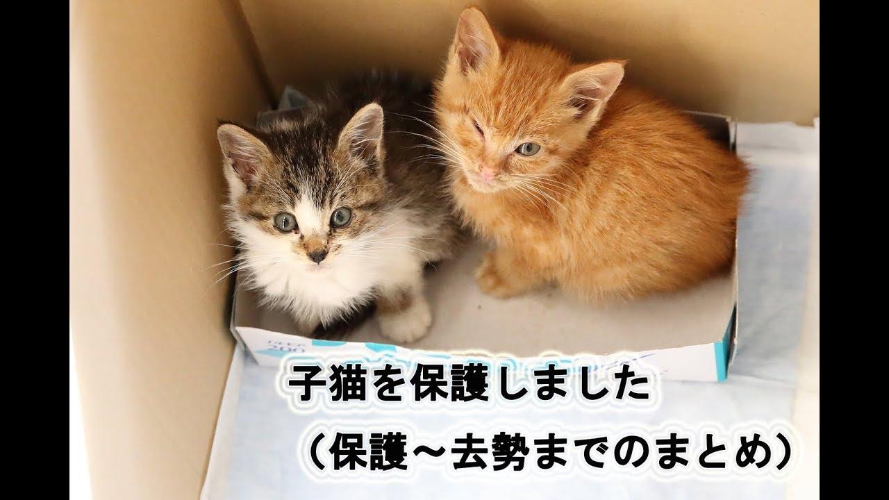 子猫ちゃんの保護!そして去勢まで!泣けて癒される子猫ちゃんとの出会いからのストーリー!