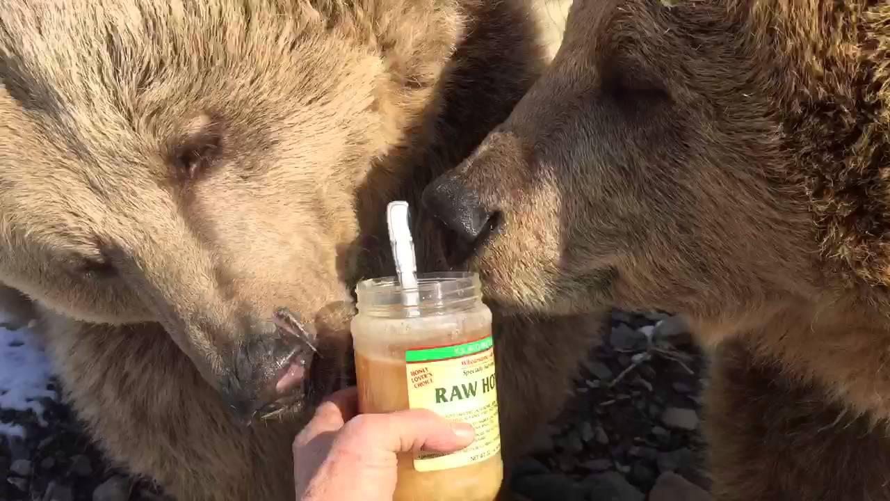 熊がひたすらハチミツを食べる動画です。