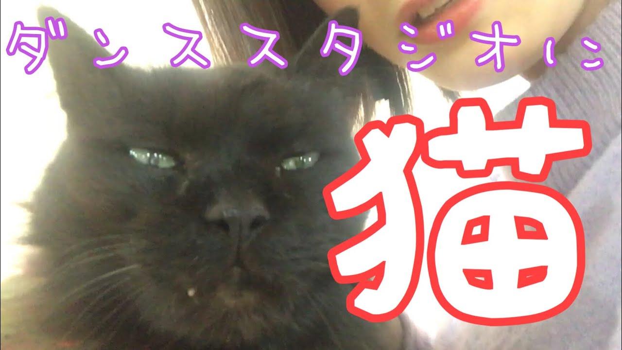 癒しの猫動画〜ぼくも猫になりたい〜
