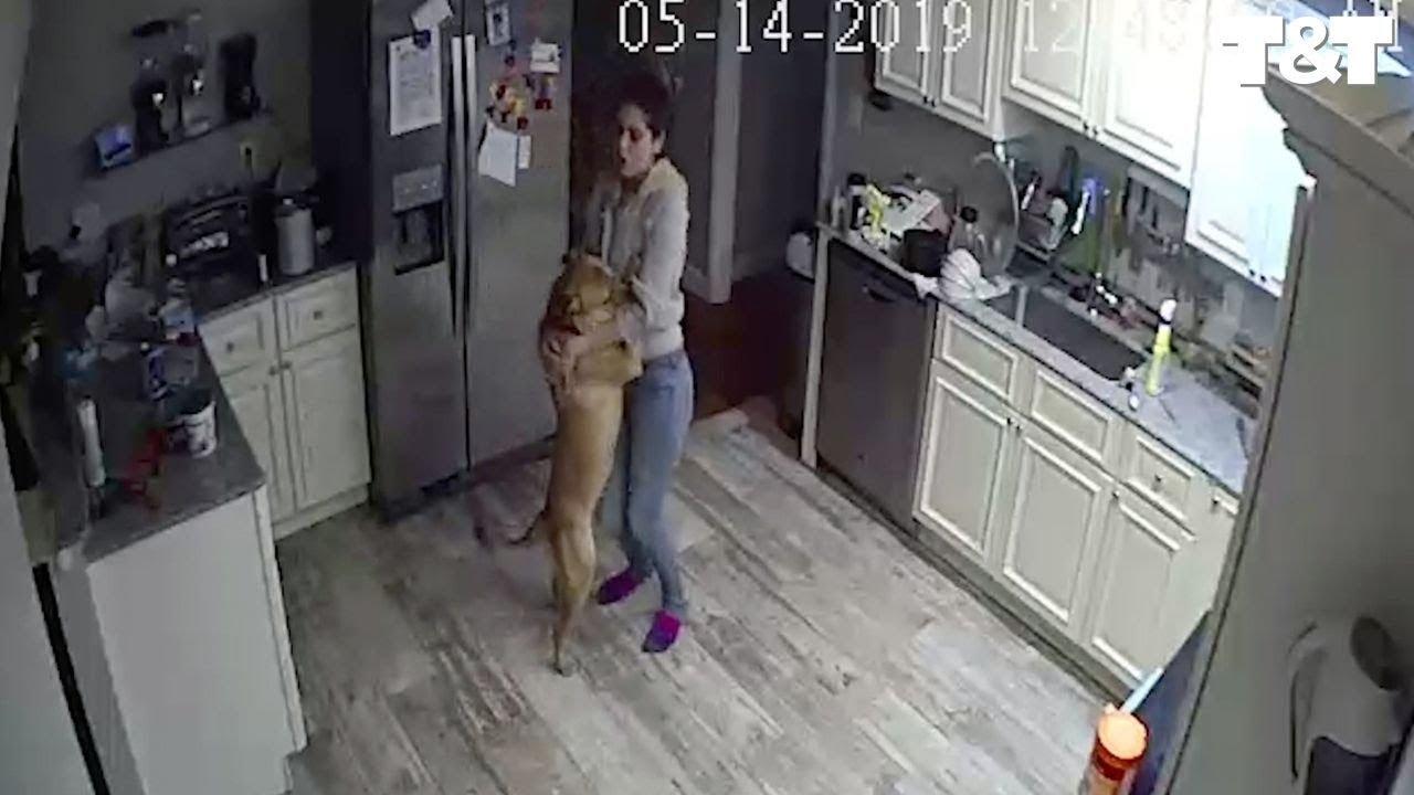 犬と一緒に楽しくダンス