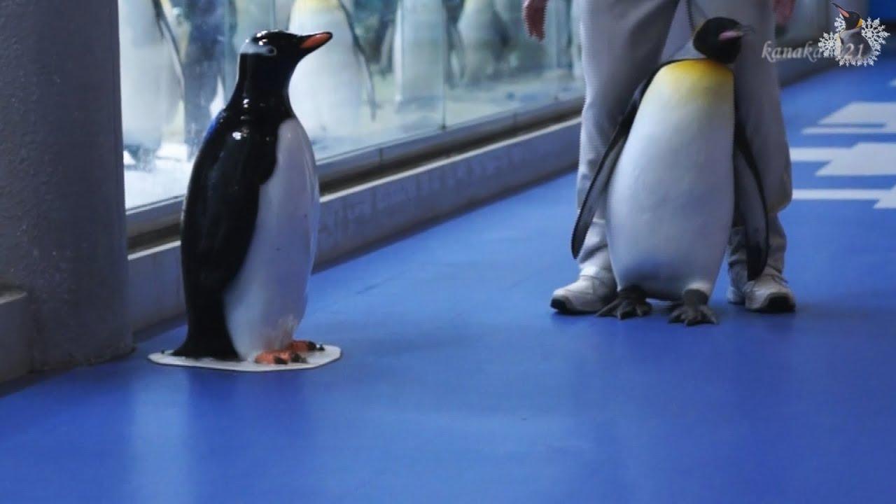 オウサマペンギンの牛歩作戦
