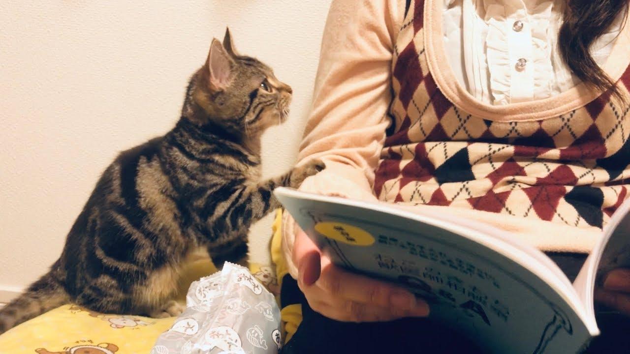 読書の邪魔をする子猫が可愛くて癒されます