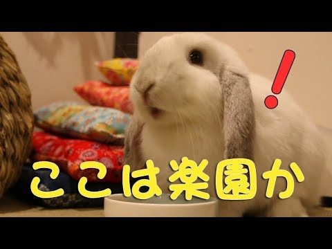 ウサギが大興奮のハウス