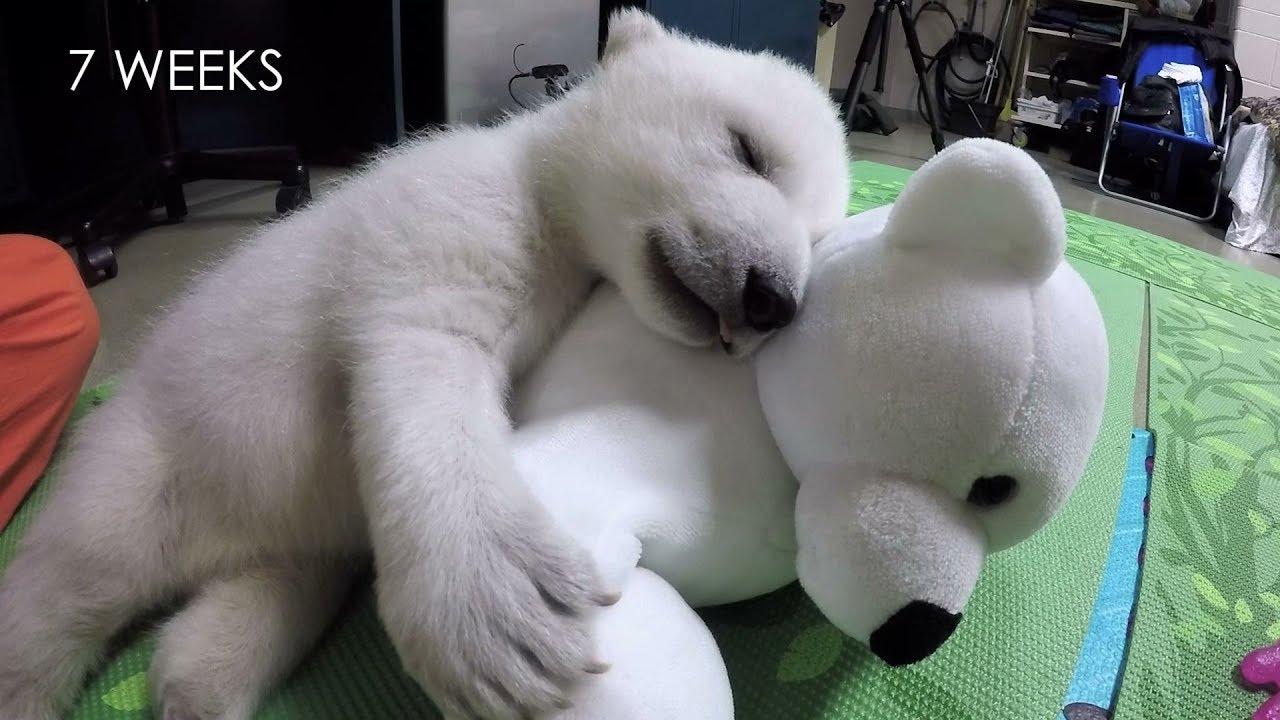 白クマ赤ちゃんの成長日記
