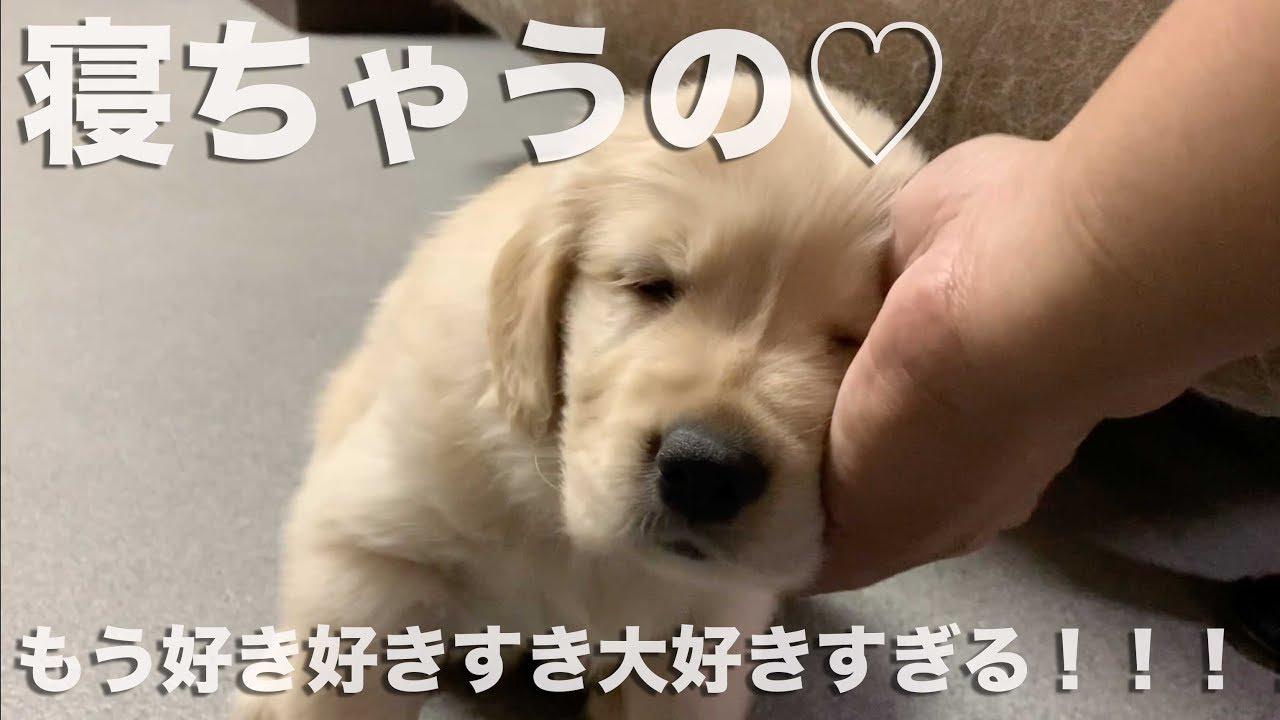 眠い~けど甘えたい~な子犬さん