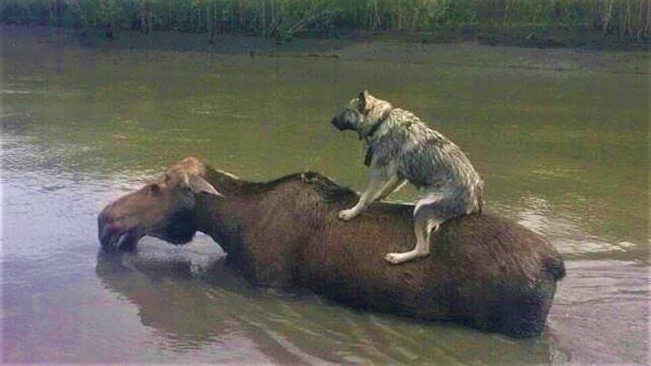 自分の身を危険に晒してまで他者を助ける動物たち