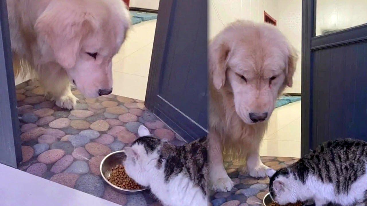 ワンちゃんと猫ちゃんの1日