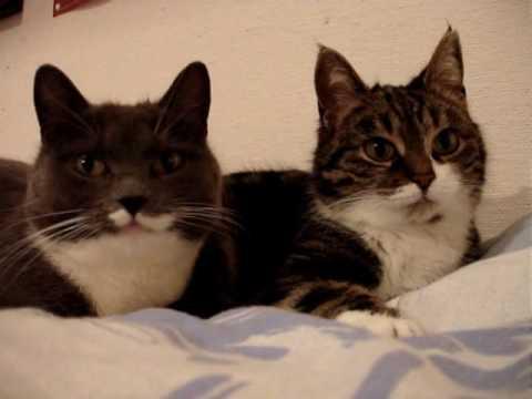 ニャゴニャゴお話する猫たち。