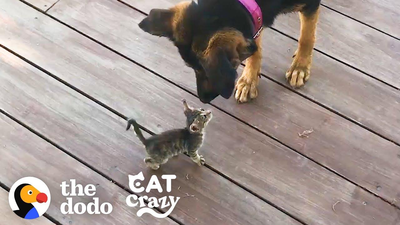 子猫のお母さん代わりになった犬