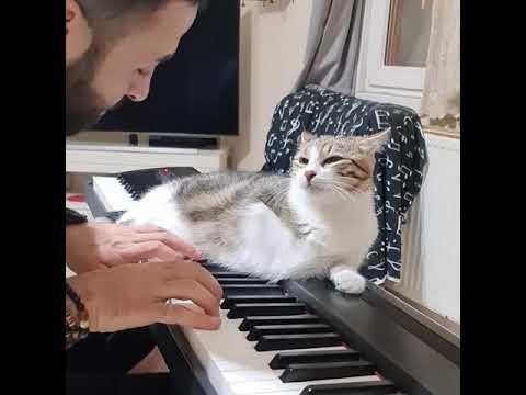 まるで恋人同士のよう?ピアノを演奏しながら猫と見つめ合う飼い主