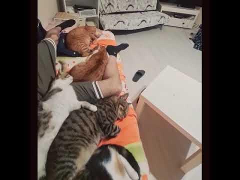 愛する猫たちとまったりお昼寝タイム