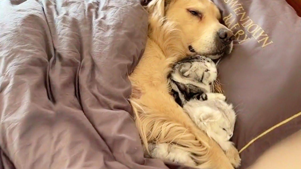 猫と犬がベッドで仲良く寝てる