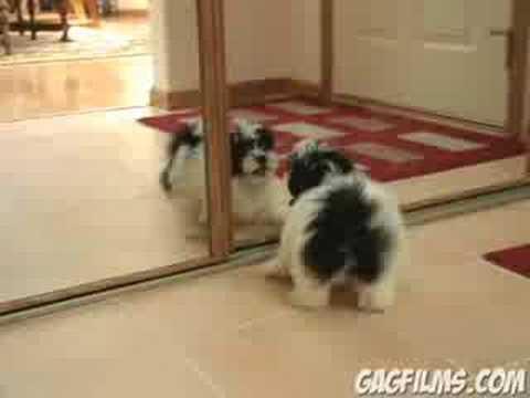 一進一退、白熱の攻防!自分自身と戦う子犬