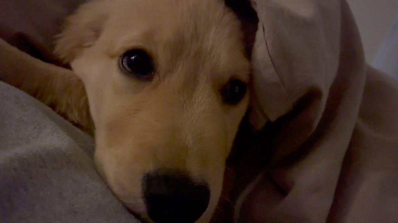子犬の朝は早い!もっと寝てほしい飼い主さんとの攻防