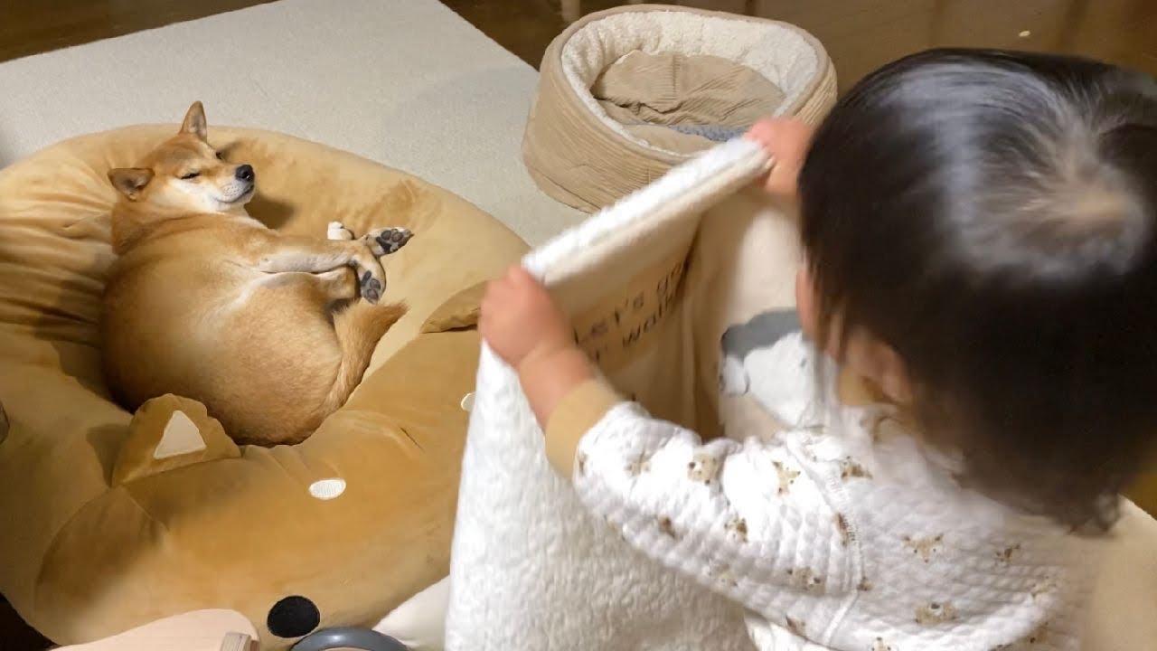 寝ようとしているワンちゃんに毛布を掛ける優しい娘!
