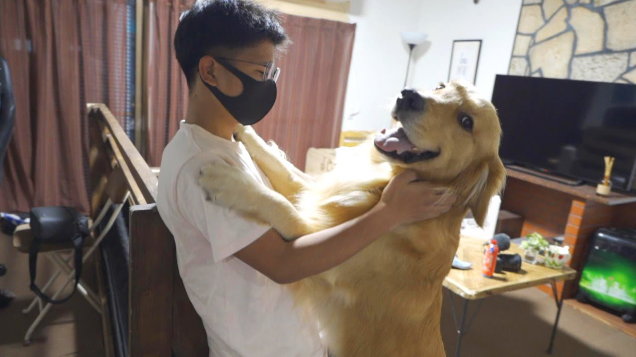 久々に再会した飼い主さんの友達に大興奮の大型犬