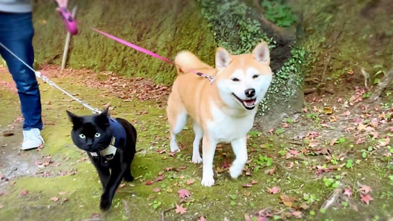 犬猫といっしょに紅葉狩り散歩