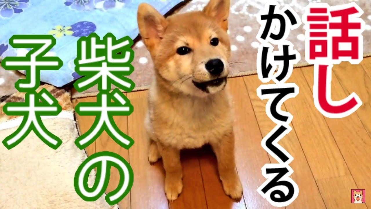 犬語は難しい
