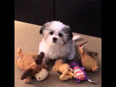 愛犬がどのぬいぐるみが一番好きかを調べる実験!