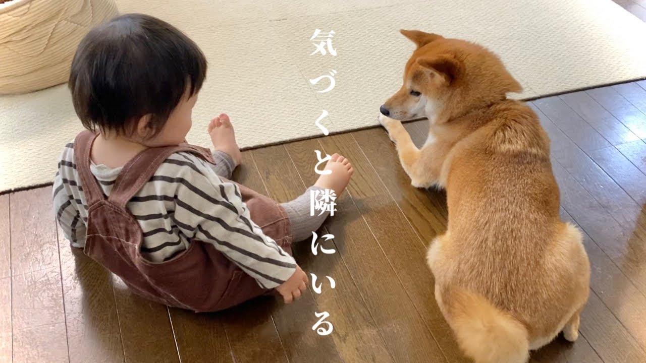 柴犬と1歳児の平和すぎる日常