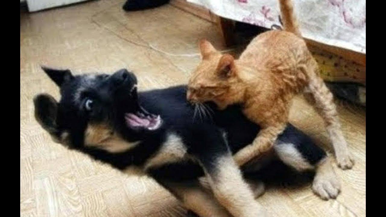 猫VS犬!どっちが強い?