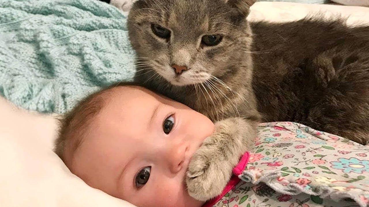 世界の面白猫たちに爆笑間違いなし!