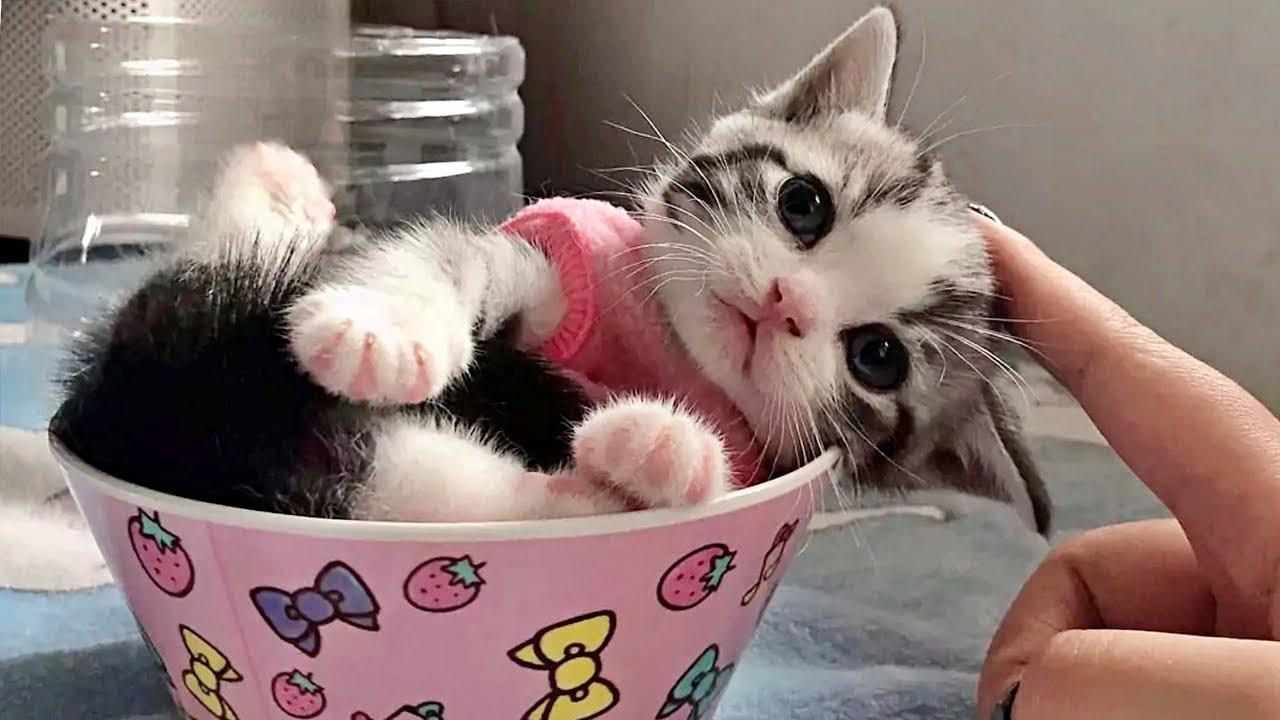 カップに入ってまどろむ子猫が可愛すぎて泣けた