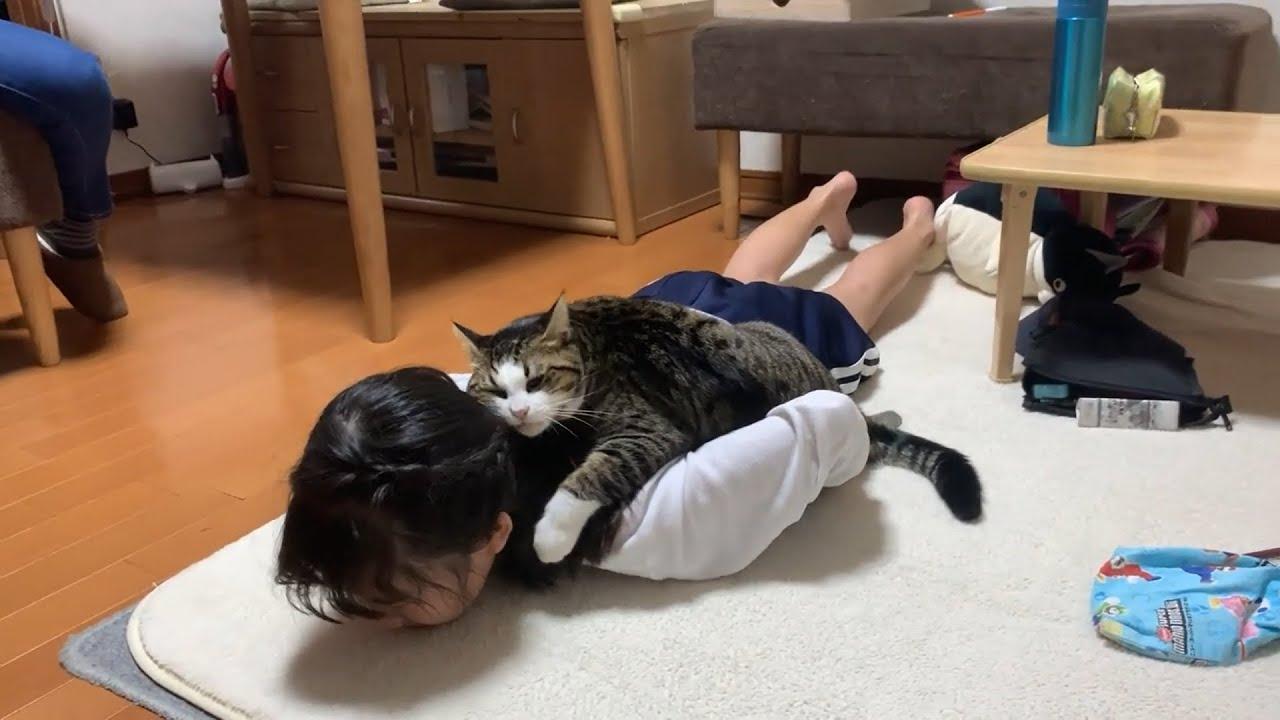 自分の顔を擦り付けるのが大好きな猫さん