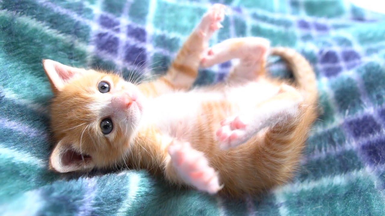 愛くるしい保護猫ちゃんたちの可愛さにメロメロに
