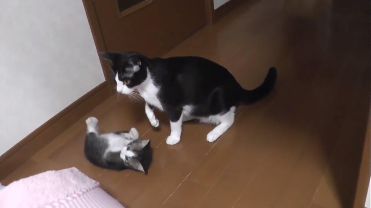 子猫たちのことが気になってしょうがない母猫