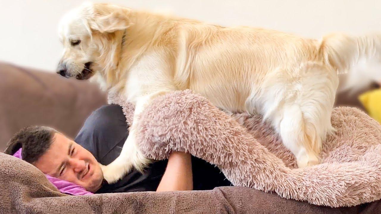 寝ている男性にいたずらをする犬の動きがダイナミック
