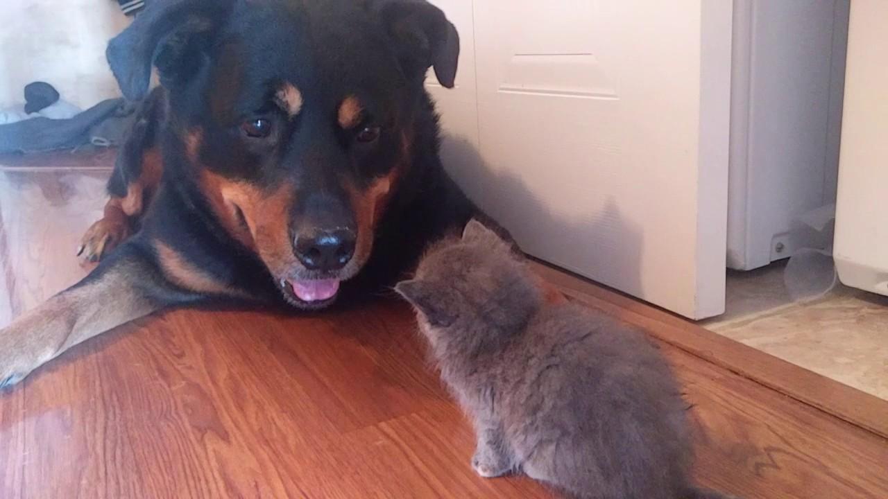ワンちゃんも子猫には勝てないのです