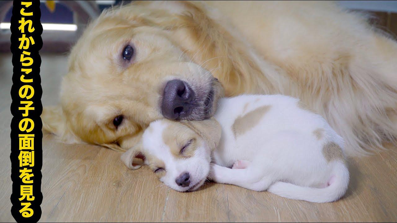 母犬の横で寝る子犬がかわいい